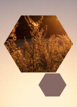 Korn sekskant